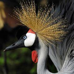 Las aves más exóticas - Vanessa Bulab Fauna, Birds, Animals, Nature, Exotic Animals, Fotografia, Animaux, Bird, Animal