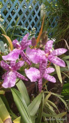 Orquídea  Jardim Botânico- Rio de Janeiro  - Foto: Marília Vidigal Carneiro