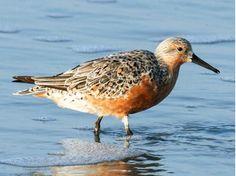 Playa Penino y las Aves migratorias | http://www.uruguaypordentro.com/playa-penino-las-aves-migratorias/