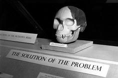 Falso eslabón perdido. - El hombre de Piltdown fue declarado como el eslabón perdido por el inglés Charles Dawson en 1912, pero en 1953 se descubrió que era falso gracias a pruebas hechas con tecnología más moderna.
