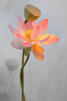 Lotus Flower Paintings / Photographic images using Akvis Oil Paint Filter Flower Painting Images, Lotus Flower Images, Lotus Painting, Oil Painting Flowers, Flower Art, Watercolor Paintings, Lotus Flowers, Flower Paintings, Paint Filter