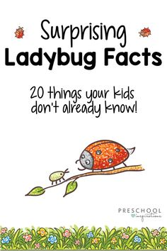 Ladybug Facts for Kids – Preschool Inspirations Here are 20 ladybug facts for kids while doing a ladybug theme, learning about ladybugs, or learning about insects and bugs. Toddlers and preschoolers love ladybugs! Preschool Bug Theme, Preschool Curriculum, Preschool Science, Science For Kids, Science Activities, Toddler Preschool, Preschool Plans, Montessori Science, Science Centers