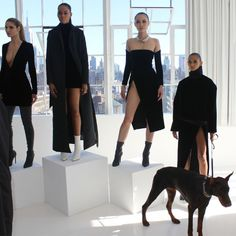 """+-+""""When+the+doberman+pinscher+isn'tthe+fiercest+in+the+room+at+the+LaQuan+Smith+presentation."""""""
