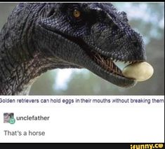 Picture memes iFunny - Penguin Funny - Funny Penguin meme - - Ummm no thats a dragon common knowledge The post Picture memes iFunny appeared first on Gag Dad. Stupid Memes, Stupid Funny, Funny Cute, Haha Funny, Really Funny, Funny Memes, Funny Stuff, Funny Things, Random Stuff