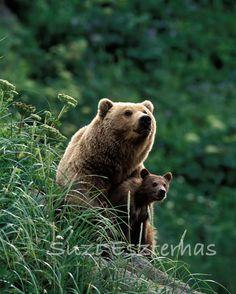 Baby Animal Photography, MOM and BABY BEAR Photo, 8 X 10 Print, Safari Baby Nursery, Wildlife Photography, Home Decor, Nursery Art, Cute
