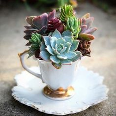 Cool 40 Easy DIY Teacup Mini Garden Ideas to Add Bliss to Your Home coachdecor.c… Cool 40 Easy DIY Teacup Mini Garden Ideas to Add Bliss to Your Home coachdecor. Succulents In Containers, Planting Succulents, Easy Garden, Indoor Garden, Garden Path, Balcony Garden, Terrace, Suculentas Interior, Deco Nature