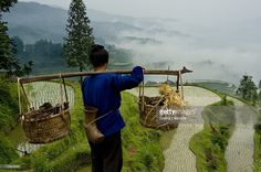Stock Photo : Peasant woman working in terraced field, Tang An Terraces, Zhaoxing, Dong Area, Guizhou Province, China