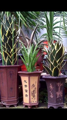 Cacti And Succulents, Planting Succulents, Planting Flowers, Big Planters, Sansevieria Plant, Lucky Plant, Jade Plants, Snake Plant, Tropical Plants