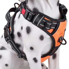 Paw Five CORE-1 Reflective No-Pull Dog Harness with Built-in Waste Bag Dispenser Adjustable Padded Control for Medium and Large Dogs,