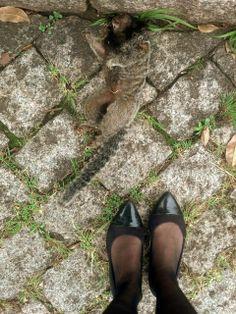 Encontrei esse macaco sagui morto agora de manhã, esquina da Paula Gomes. ????