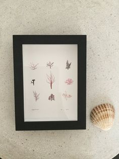 Nordic and co Beach memories framed carefully dried seaweed, framed Memory Frame, Seaweed, Home Decor, Art, Art Background, Decoration Home, Room Decor, Kunst, Performing Arts