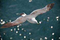 The sea gull in the sky