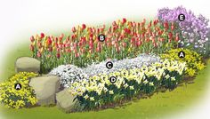 Plant tulips and daffodils in the fall for a spring spectacular next year. Add in a few perennial companions, such as the basket of gold, rock cress, and dame's rocket seen here, and you're set to go. The rocks are optional, but they add visual relief from the intense colors. This bed, which is roughly 10 feet long and 4 feet wide, is intended for a sunny spot with good drainage.