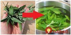Starká nás vždy učila, že šalvia je zázračný bylinka a vždy by sme ju mali mať v záhradke. Šalviu volala Babské ucho a tento názov dodnes používam aj ja. Naša starká nám dávala na kloktanie Korn, Celery, Spinach, Ale, Detox, Herbs, Vegetables, Plants, Gardening