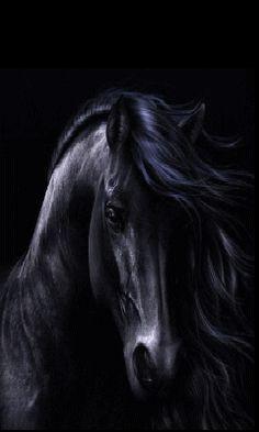 caballos cara - Buscar con Google