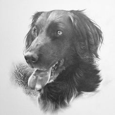 one of my favorite commissions I've done. (I think it was approx. Wildlife, Pencil, This Or That Questions, Portrait, Dogs, Artist, Animals, Animales, Animaux