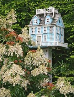 Victorian birdhouse and Andromeda bush...