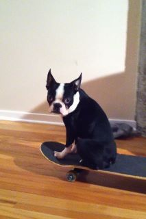 One of our fans, Harley, loves to skateboard.