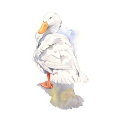 Watercolor painting - Duck painting-   PRINT of watercolor painting 5 by 7 by Louise De Masi