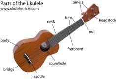 Parts of the Ukulele  Macey is taking ukulele at band camp :)