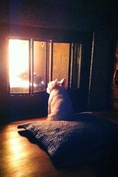 12 pets who absolutely refuse to share the heat this winter