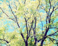 Tree Photography Luminous Green tree Fine by honeytree