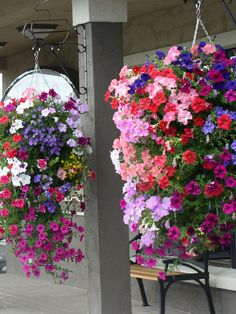 Bloom Master Australia - Simply the finest, most productive hanging baskets and planters in the world Container Flowers, Container Plants, Container Gardening, Hanging Flower Baskets, Hanging Planters, Beautiful Gardens, Beautiful Flowers, Front Porch Planters, Plantar