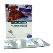 Advantage 400 Spot On for Very Large Dogs 25kg-40kg 4 Pipettes: £14.85 #spoton #largedog #fleatreatment #ticktreatment #dog #pets