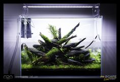 Green Aqua Showroom | current shots from our gallery including the latest event tanks from re-Scape.