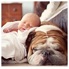 Cute baby and bull dog pic
