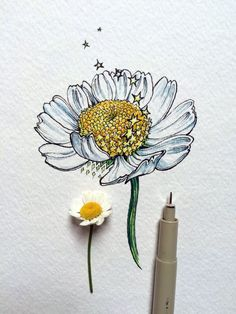 Flower Drawings Tips nic - Flower Sketches, Art Sketches, Art Drawings, Flower Drawings, Pencil Drawings, Daisy Drawing, Floral Drawing, Watercolor And Ink, Watercolor Flowers