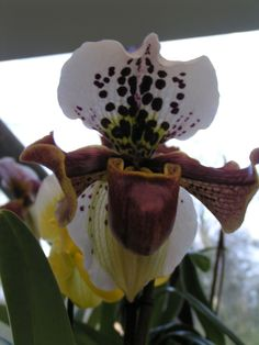unique orchid <3