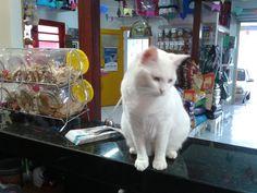 Nossa mascote Princesa!