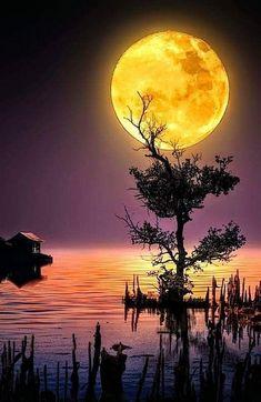 Beautiful Nature Pictures, Beautiful Nature Wallpaper, Beautiful Moon, Amazing Nature, Pretty Pictures, Beautiful Landscapes, Moon Photography, Landscape Photography, Yellow Moon