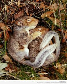 Spooning. Adorable animal style. - Click image to find more animals Pinterest pins