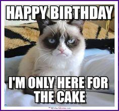 38 ideas for funny happy birthday meme hilarious grumpy cat Cat Birthday Memes, Grumpy Cat Birthday, Funny Happy Birthday Meme, Funny Happy Birthday Pictures, Funny Pictures, 30th Birthday, Cake Birthday, Birthday Animals, Birthday Ideas