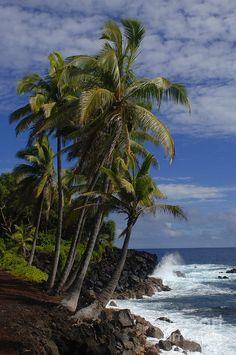 Hawaiian Drama: palm trees on the shore