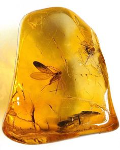 Baltic Amber with insect inclusions