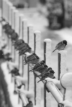 Stand out, even if you're alone... A 'bank', a 'bliss' a 'battery', a 'brace' or a 'bench' of birds...