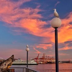 "Not a bad #sunset tonight down on the #Seattle waterfront. This was an unusual composition I chose to feature the sky. I call this one ""Waterfront Sentinels"". And yes I cleaned up some of the bird poo running down the sides of the lights... digitally cleaned that is. Trust me the photo wouldn't be quite as nice if I had left it in!"