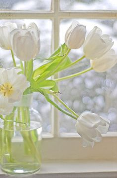 Pretty white tulips on a winter's day...beautiful photograph!