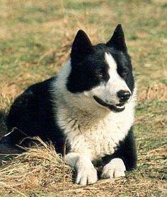 Karelian Bear Dog Names