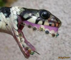 Funny Snake Pictures Wearing Braces | Funny Pictures Gallery
