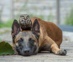 Owl and a dog http://ift.tt/2qTJRTo
