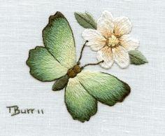 brisbane butterfly