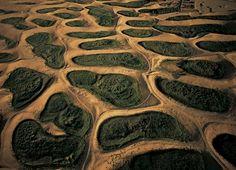 Yann Arthus-Bertrand. Végétation au creux des dunes, environs d'El-Oued, Algérie (33°25'N – 6°57'E)
