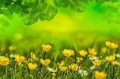 Lente, Achtergrond, Bloem, Gebied, Weide