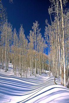 Winter's Coat, Dixie National Forest Aspen photo by Bob Simari