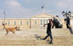Lukanikos, el perro anarquista de Grecia - Taringa!