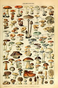 Mushrooms print: Fungi  Vintage Poster with black, white, walnut and luxury gold FRAMES Portrait Wall Décor